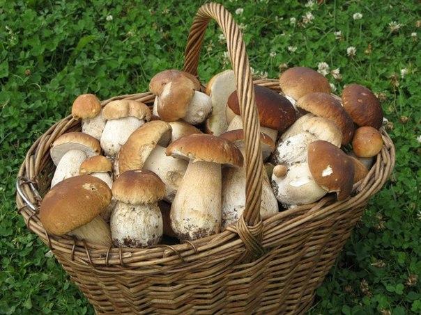 Сезон тихой охоты: грибные места Подмосковья. 3188.jpeg