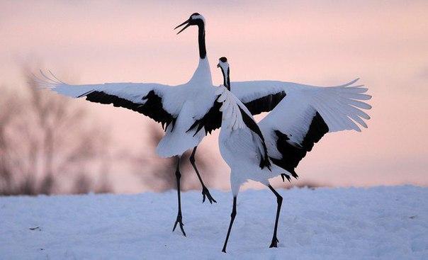 В столице появится первый парк птиц с цаплями и журавлями