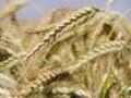 ООН предрекает дефицит продовольствия